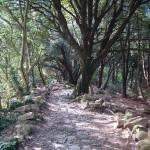alte Wege durch Eichenwald